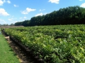 2013-Summer-Field-Trip-Stahmann-Farms-Trawalla-nursery-01