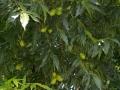 FieldDay-Warwick-Blackers-orchard-04