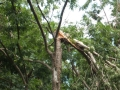 damage-01-ex-cyclone-oswald-snapped-tree