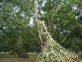 damage-09-storm-damage