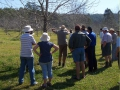 Field-Day-Frank-Andrea-Boyle-orchard-Lismore-NSW-01
