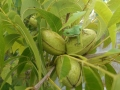 wildlife-01-tree-frog-&-nuts