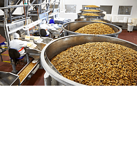 slide - 05 – Pecan Production